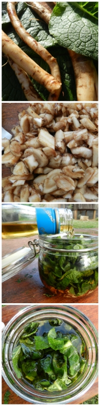 DIY Comfrey Tincture Organics Love and Co