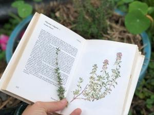 Thyme Organics Love and Co, Naturopathic Tea