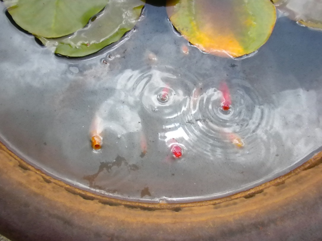 Water in Permaculture Ponds